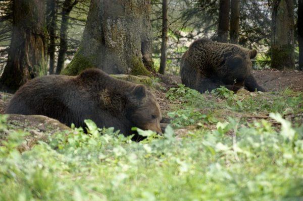 熊の撃退法